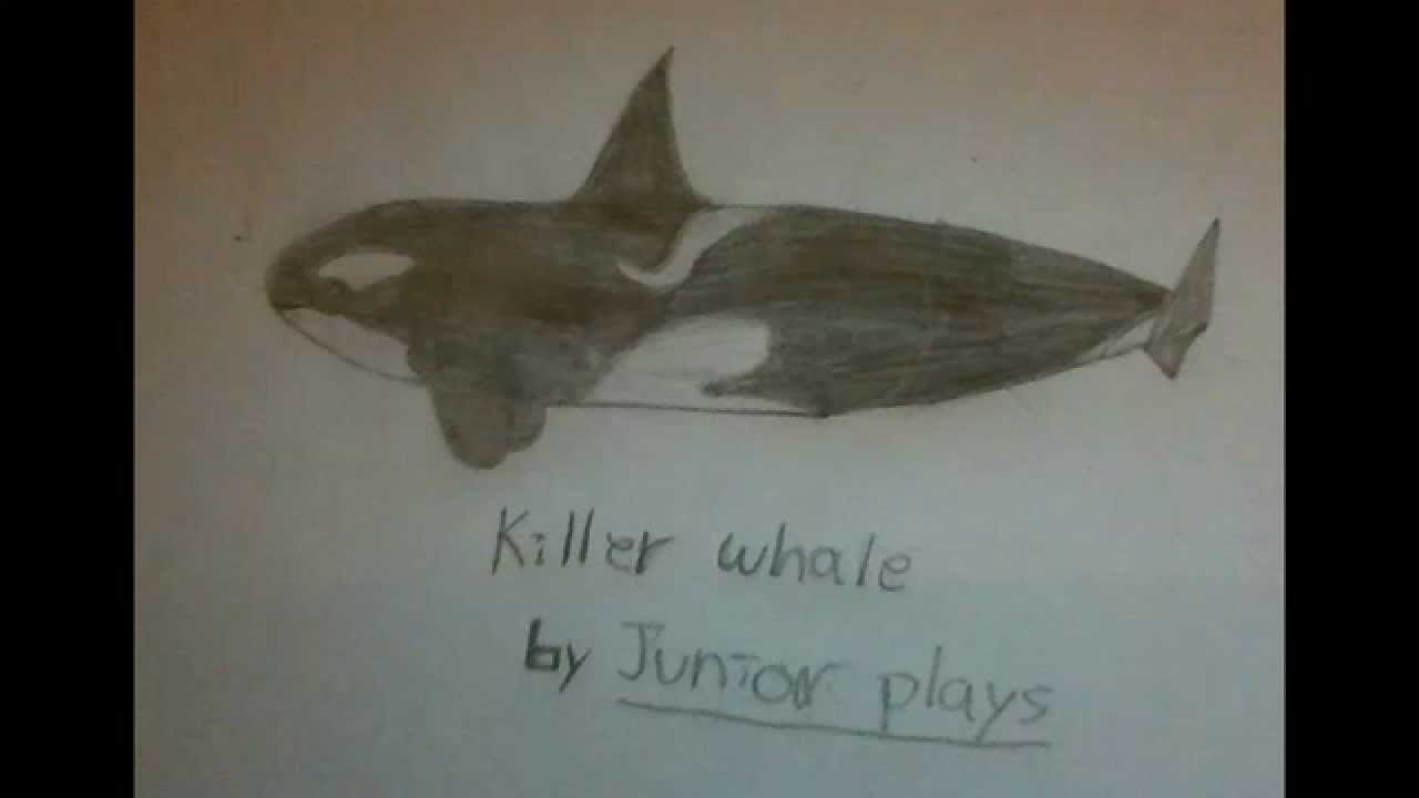 how to draw a easy killer whale youtube