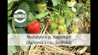 Rozhovor s p. Vagaským (Agromix s.r.o., Sedliská) o účinku prípravku HUMAC Agro na jahodovú plantáž.