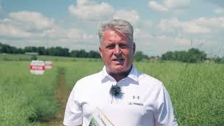 Demo Farma Grodkowice- omówienie odmian półkarłowych rzepaku ozimego marki Pioneer