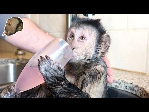 The Royal Wine Glass Monkey Bath!