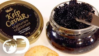 KELP CAVIAR | How It's Made