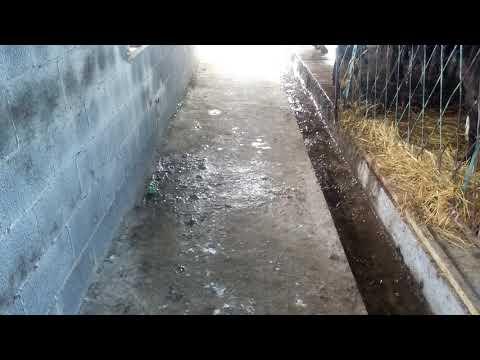 Как построить сарай для бычков