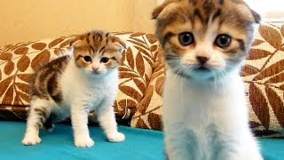 The Cutest Kittens Ever