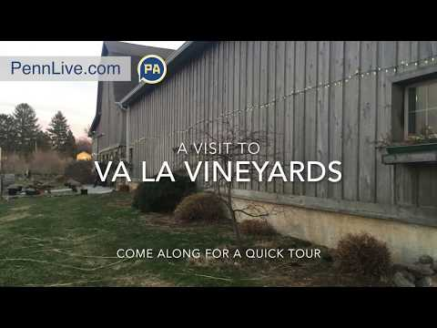 A visit to Va La Vineyards in Chester County, Pa.