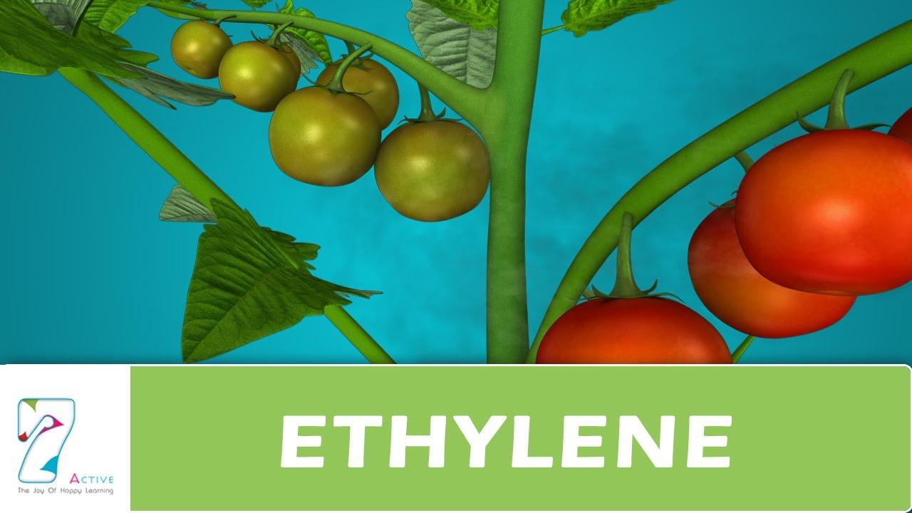 How to get ethylene