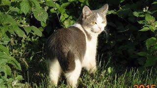 История кошек.часть 1