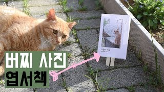 마당 고양이 버찌 굿즈 사진 엽서책을 만들었어요 / 째폴보&프렌즈