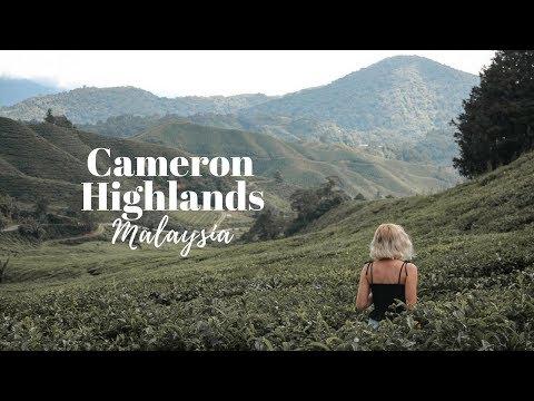 THE INCREDIBLE CAMERON HIGHLANDS, MALAYSIA! 🇲🇾