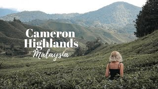 THE INCREDIBLE CAMERON HIGHLANDS, MALAYSIA! 🇲🇾