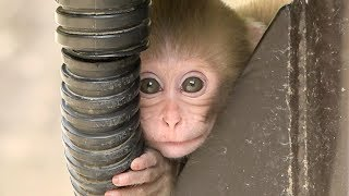 【SNOW MONKEY】 ニホンザル / 地獄谷野猿公苑 ☆Cute Baby Monkey☆ 1 year documentary vol.2