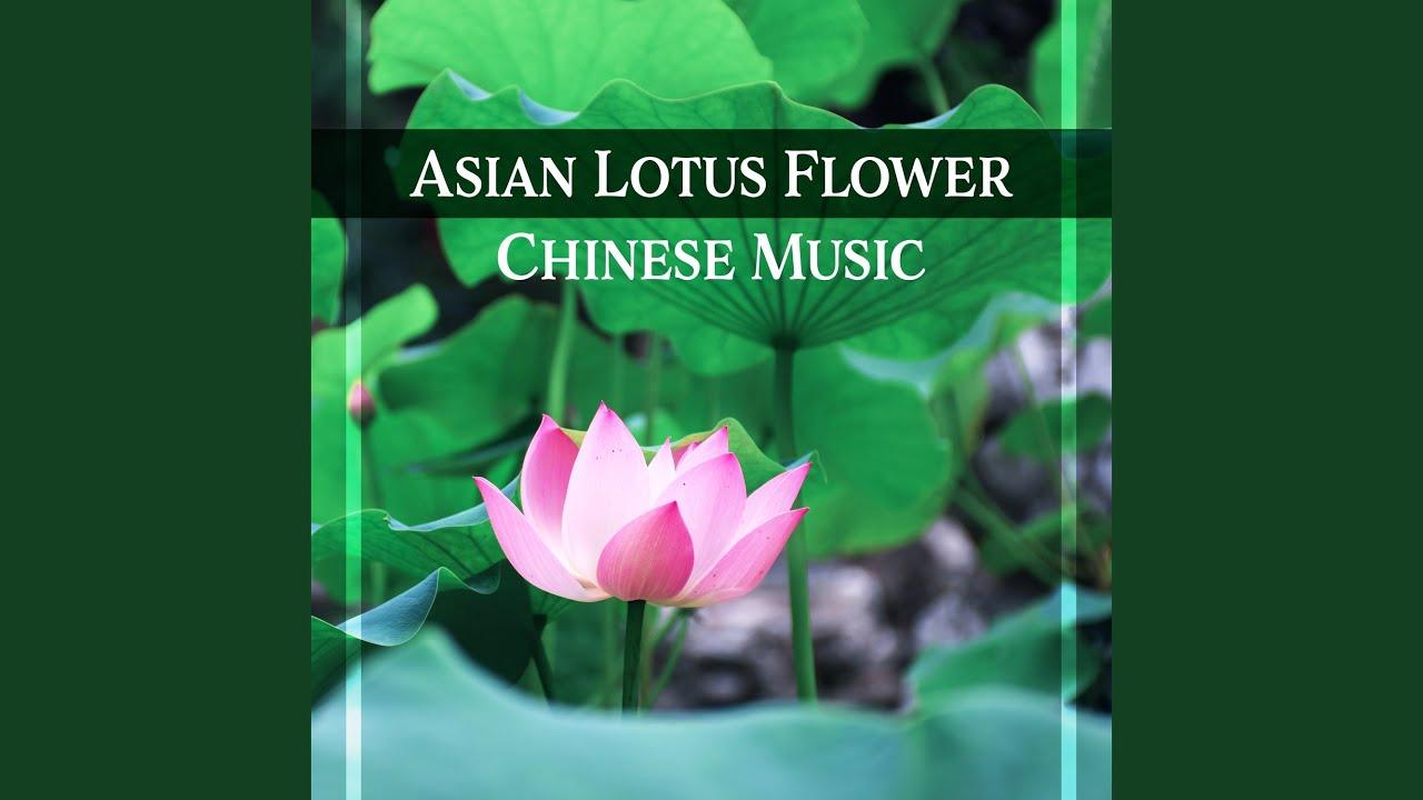 Asian Lotus Flower Youtube
