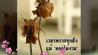ดอกไม้แห้งกับความทรงจำ-ไม้เมือง