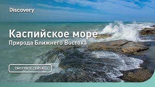 Каспийское море | Природа Ближнего Востока | Discovery
