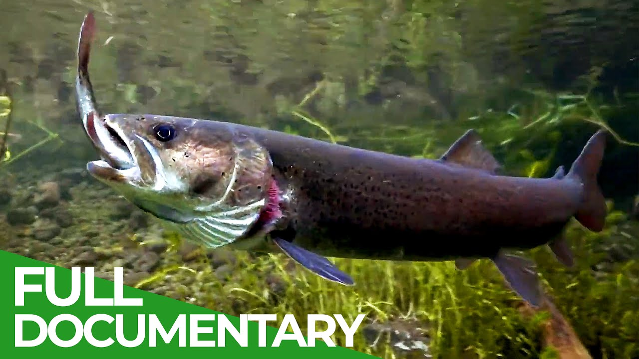 Alpine Rivers: The Cradle of Life | Free Documentary Nature