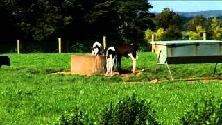 Be Assured - Dairy in Australia