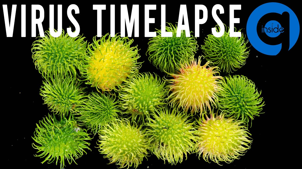 Virus Time Lapse (Just Kidding) - Rambutan Time Lapse