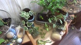 Цветы и питомцы в моем доме. Видео о моих домочадцах и моем хобби. Нарезка.