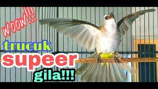 Download TRUCUK GILAA!!!, NGEKEK NGEROL NGGARUDA