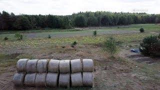 Законы волынского леса. #Стобыховка | #ВУкраине