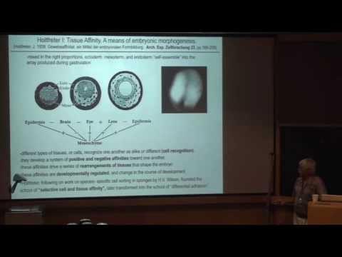 Developmental Biology I
