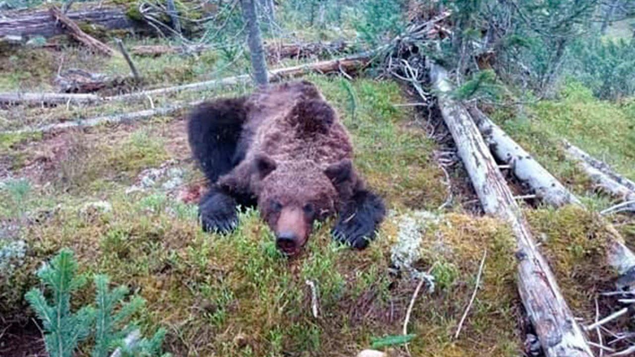 Медведь загрыз 16-летнего подростка в природном парке «Ергаки»