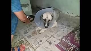 Операция Тузику.   Щенок поедал кошку с дороги