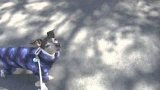 2014年3月31日 桜を見ながら散歩してるだけの動画。 3月半ばに、手足に...