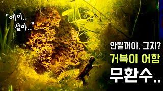 물 안갈아주는 거북이 어항 만들기무환수 무여과원스팜 N…