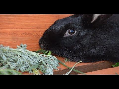 Какой травой можно кормить кроликов, что такое полынь и как она выглядит. Молодым кролиководам.