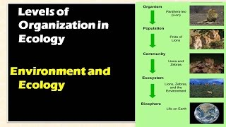 1.2. Levels of Organizations in Ecology: Environment and ecology [Learn Online] thumbnail