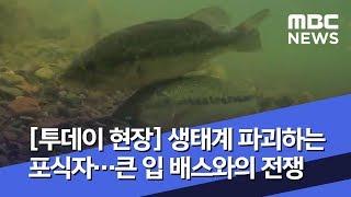 [투데이 현장] 생태계 파괴하는 포식자…큰 입 배스와의…