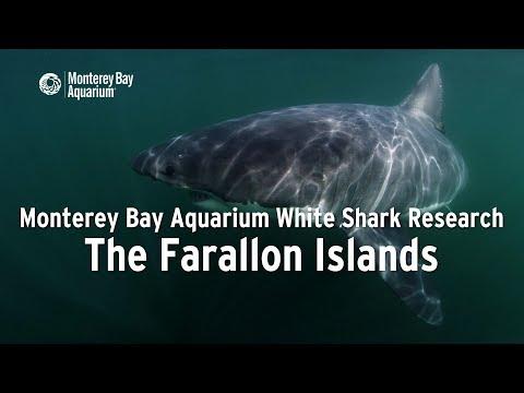 Project White Shark — The Farallon Islands