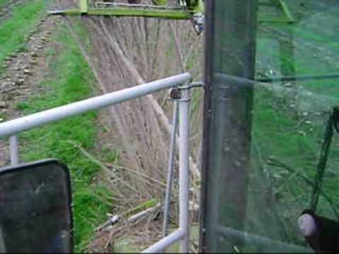 Pioppo pioppeto pioppicoltura clone i214 arboricoltura for Trivella a mano leroy merlin