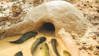 Amazing Muddy soil Hole Trap To Catch Fish with Countryside Cooking -Eating Gently -Primitive Eating