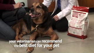 Banfield Pet Hospital - Creating a Weight Loss Plan for Your Pet