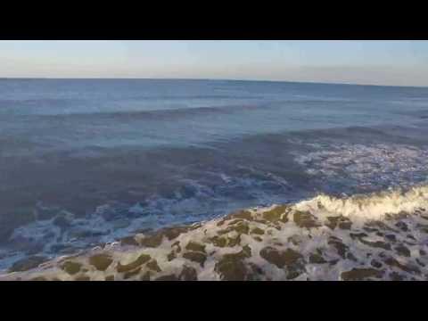 Close Encounter With Sharks off Ponte Vedra Beach