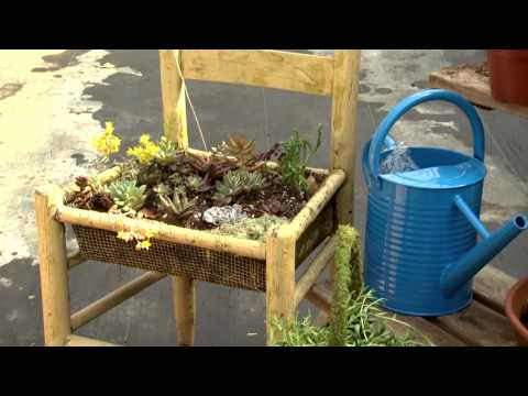 Sedum Displays, Southern Gardening TV, March 9, 2014