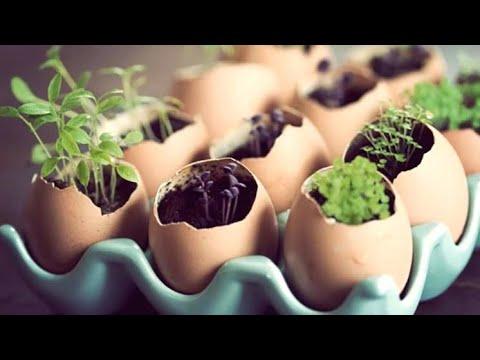 Semilleros con Cáscara de Huevo || Almácigo con Cáscara de Huevo || Cultivo Paso a Paso