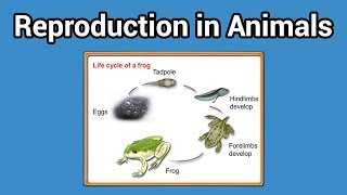 Reproduction in Animals (Animal That lay eggs class-4)