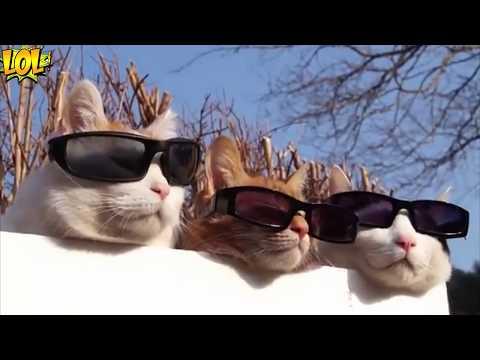 реально смешные коты - приколы с котами смотреть онлайн