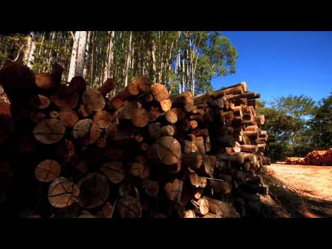 The tree industry and the restoration of the Atlantic Forest (full)