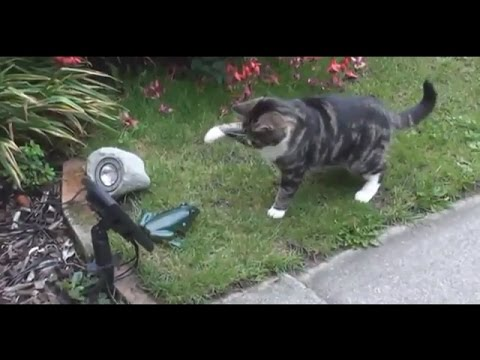 The funniest and most hilarious ANIMAL videos #3 – Funny animal compilation – Watch & laugh!