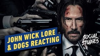 John Wick Lore & Dogs React to Dogs Reacting - Social Studies #2