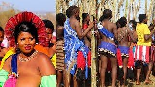 LOOK, HOW HANG OUT BRIDES OF AFRICAN KING - MY TRIP The Kingdom of Swaziland
