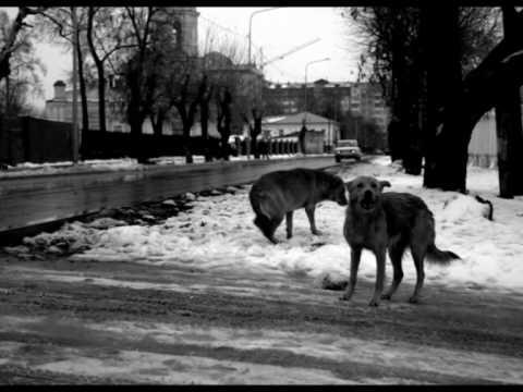 Таял. Федоров Л.