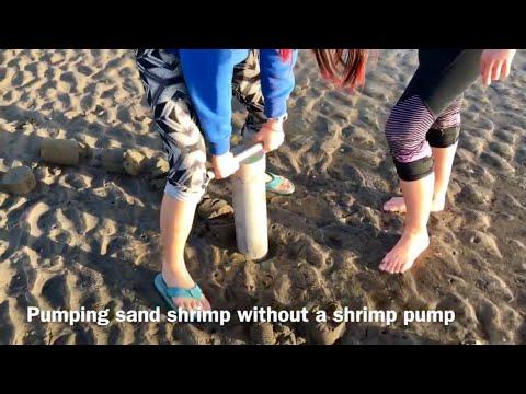 Digging Sand Shrimp - Oregon Coast