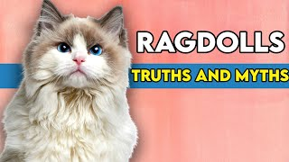 Ragdoll Cats  Biggest TRUTHS And MYTHS