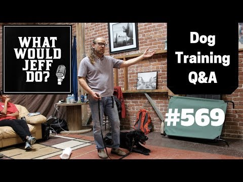 dog-training---stop-dog-marking---hyper-puppy---what-would-jeff-do?-q&a-ep.569-(2019)