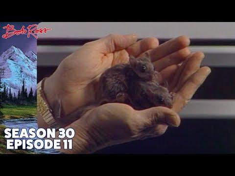 Bob Ross - A Cold Spring Day (Season 30 Episode 11)