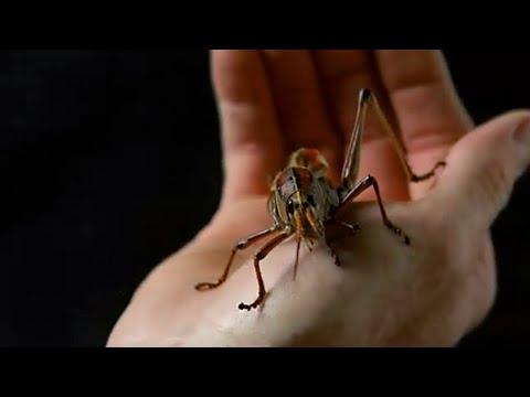 几分钟看科幻片《蝗虫过境》,变异蝗虫疯狂攻击美国